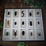 Vintage Entomology Collection